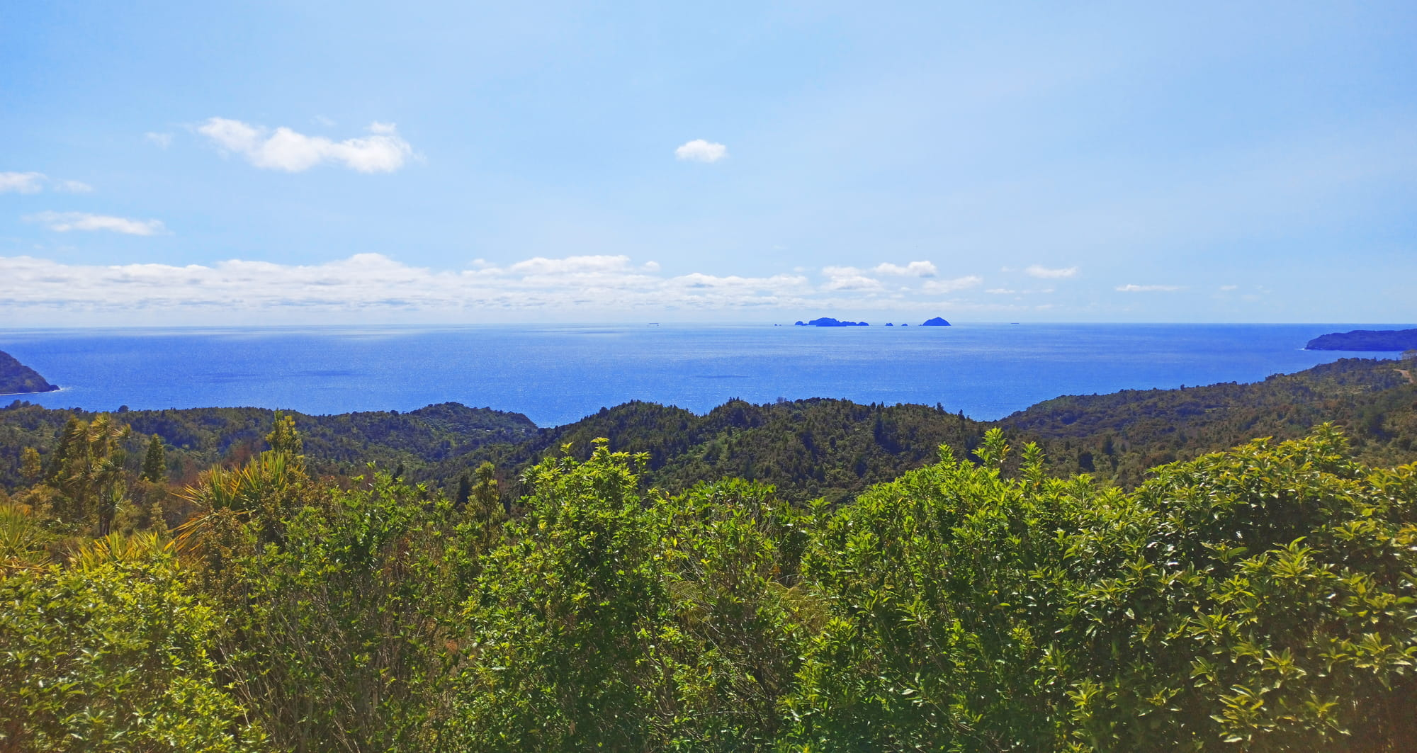 Shot of Coromandel from the forest out to the ocean