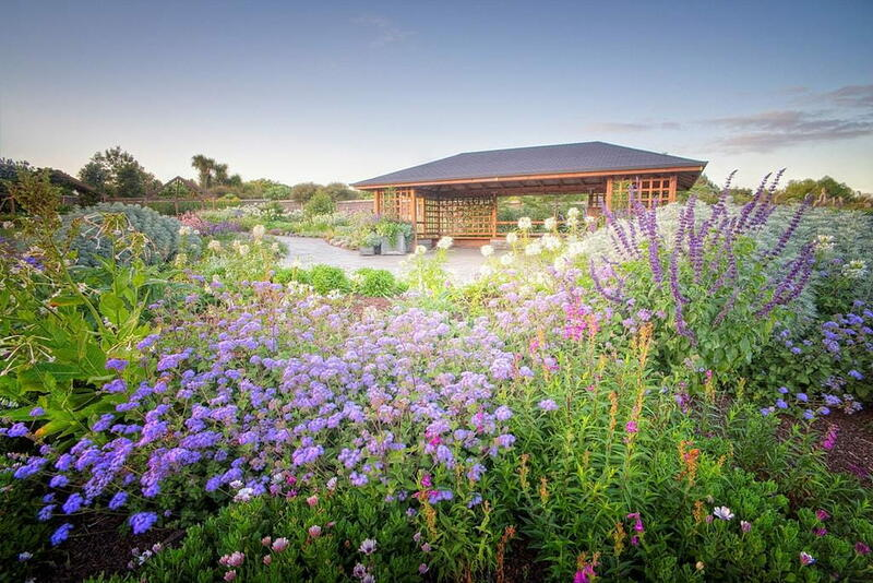 Purple flowers in front of a wooden pergola